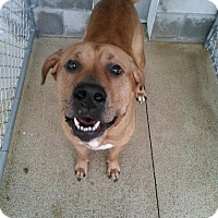Adopt A Pet :: Ziggy - Mt. Gilead, OH