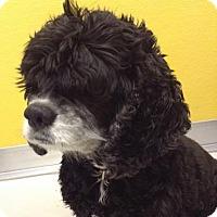 Adopt A Pet :: Rascal - Suwanee, GA