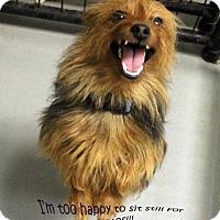 Adopt A Pet :: Kaiser - Waco, TX