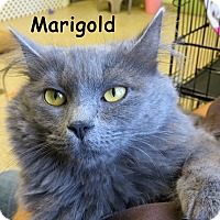 Adopt A Pet :: Marigold - Warren, PA