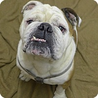Adopt A Pet :: Cody - Santa Ana, CA