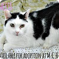Adopt A Pet :: Princess - Knoxville, IA