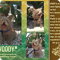 Adopt A Pet :: WOODY - Los Angeles, CA
