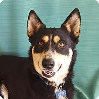 Adopt A Pet :: Buddy - Akron, OH