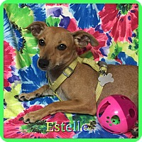 Adopt A Pet :: Estelle - Hollywood, FL
