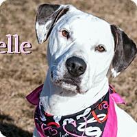 Adopt A Pet :: Belle - Hamilton, MT