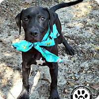 Adopt A Pet :: Popper - Kimberton, PA