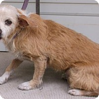 Terrier (Unknown Type, Medium) Mix Dog for adoption in Birch Tree, Missouri - Tippy