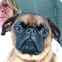 Adopt A Pet :: Jofi - Cumberland, MD