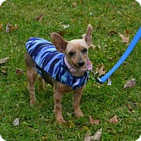 Adopt A Pet :: Eleanor - Akron, OH