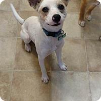Adopt A Pet :: Gracie - Salisbury, NC