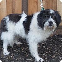 Adopt A Pet :: Paris - Las Vegas, NV