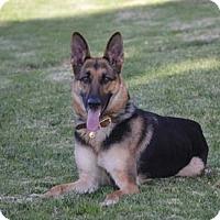 Adopt A Pet :: Loralai - Mira Loma, CA