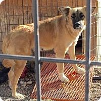 Adopt A Pet :: Kai - Divide, CO