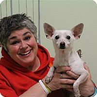 Adopt A Pet :: Casper - Elyria, OH