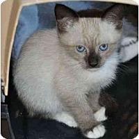 Adopt A Pet :: Tiki - Reston, VA