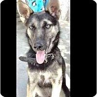 Adopt A Pet :: Nenna - San Diego, CA