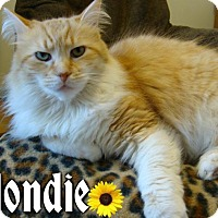 Adopt A Pet :: Blondie - River Edge, NJ