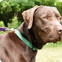 Adopt A Pet :: Ranger - Cincinnati, OH