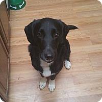 Adopt A Pet :: Drake - Newport, KY