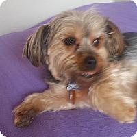 Adopt A Pet :: Ozzie - Lodi, CA