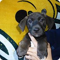 Adopt A Pet :: Rosie - Oviedo, FL