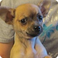 Adopt A Pet :: Flynn - Allentown, PA