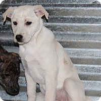 Adopt A Pet :: Firefox - Harmony, Glocester, RI