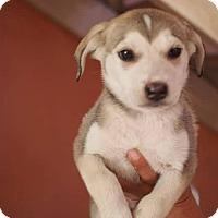 Adopt A Pet :: Tala - Vancouver, BC