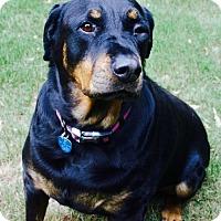 Adopt A Pet :: Izzy - White Hall, AR