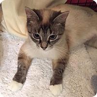 Adopt A Pet :: Genevieve - Grand Ledge, MI