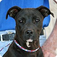 Adopt A Pet :: Salem - Palmdale, CA