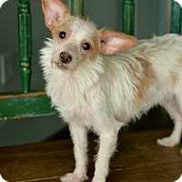 Adopt A Pet :: Izzy - San Antonio, TX