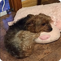 Adopt A Pet :: Richie - Bernardston, MA