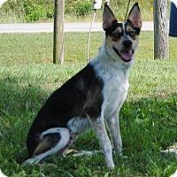Adopt A Pet :: Jessie - Parsons, KS