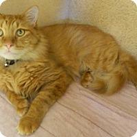 Adopt A Pet :: Miguel - Columbus, NE