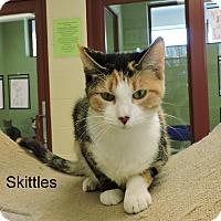 Adopt A Pet :: Skittles - Slidell, LA