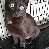 Adopt A Pet :: Phoebe - Sharon Center, OH