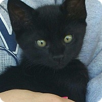 Adopt A Pet :: Salem - Marietta, GA