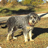 Adopt A Pet :: ZANEY - Newburgh, NY