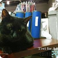 Adopt A Pet :: Tiwi - Toronto, ON