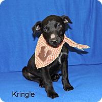 Adopt A Pet :: Kringle - Slidell, LA