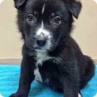Adopt A Pet :: ADOPTED!!!   Rock - Oswego, IL