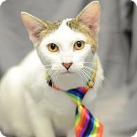 Adopt A Pet :: Frosty - St. Cloud, FL