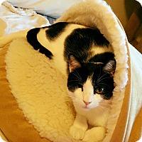 Adopt A Pet :: Napa - Tucson, AZ
