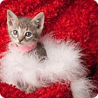 Adopt A Pet :: Rosalina - Dallas, TX