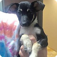 Adopt A Pet :: Pinocho - Las Vegas, NV