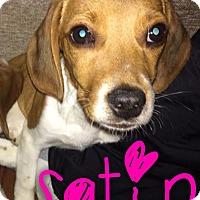 Adopt A Pet :: Satin - Garden City, MI