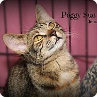 Adopt A Pet :: Peggy Sue - Glen Mills, PA