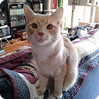 Adopt A Pet :: HmmmUs - Herndon, VA